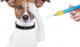 dog-vaccination-29221605.jpg