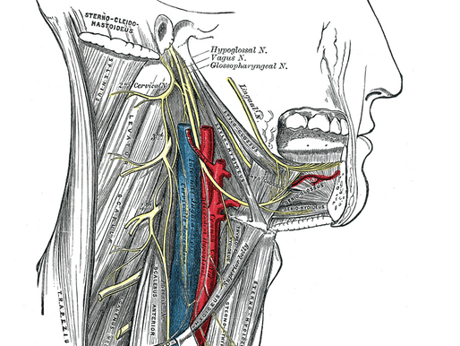 What is Hypoglossal Nerve Stimulation Therapy for Sleep Apnea?
