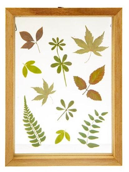 Herbarium Leaves Floating Frame