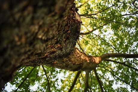 portfolio_tree.jpeg