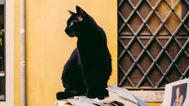 A Behavioral Look At Superstition