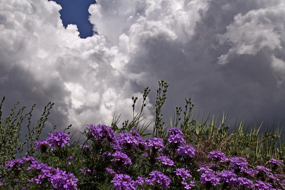 clouds and verbena 2.jpg
