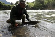 Pesca de Salmon Chinook