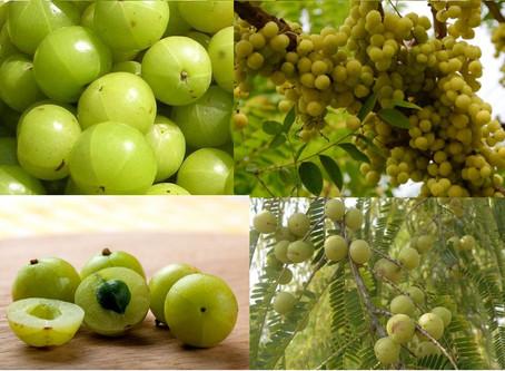 Rasayana herbs & lifestyle for anti-ageing & longevity