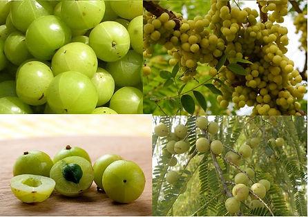 amalaki-fruit.jpg