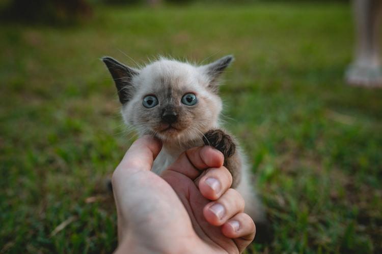 Kitten, Cat, Happy, Cute Cat, Cute Kitten, Mental Health, Eye Bleach, Happiness, The Sheeples, Sheeples