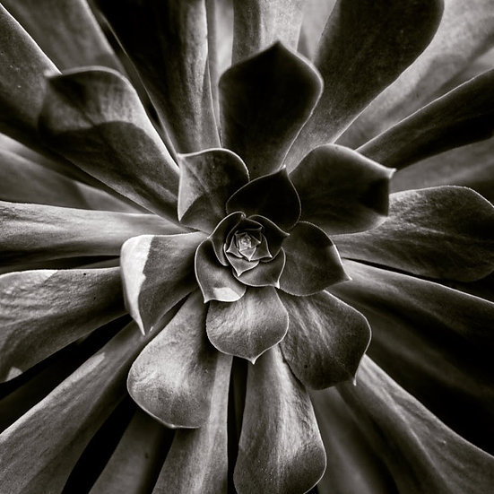 Symmetry #1