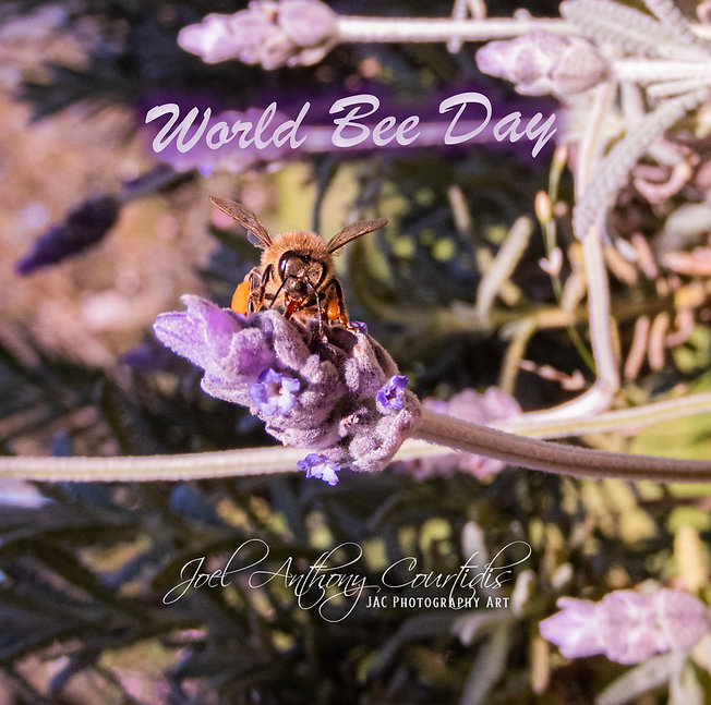 World Bee Day (Watermarked).jpg