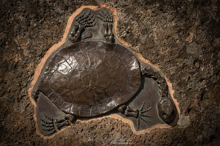 World Turtle Day (Watermarked).jpg