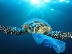 Solving The Global Plastic Pollution Crisis!