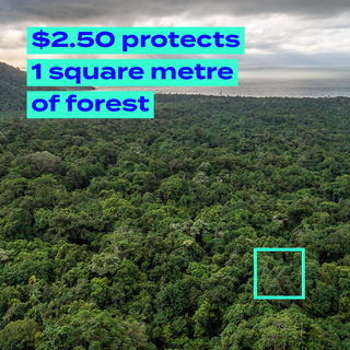 $2.50 protects 1 square meter of forest