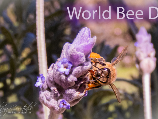 World🌏Bee🐝Day!