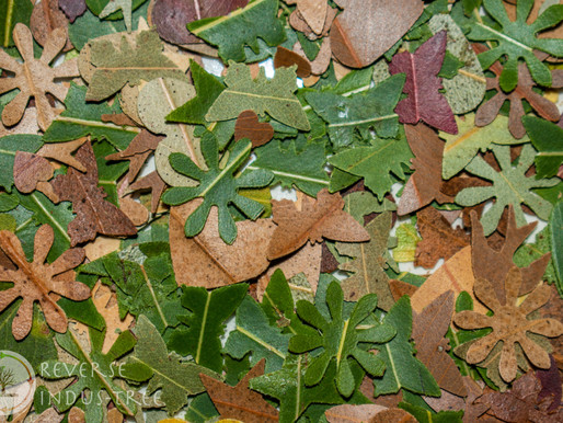 DIY Gum leaf Confetti is Easy!🌏✅