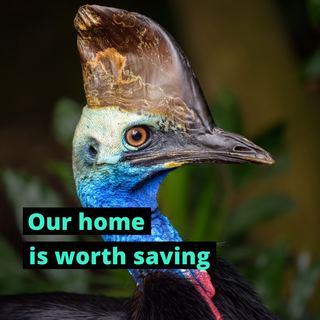 Our home is worth saving