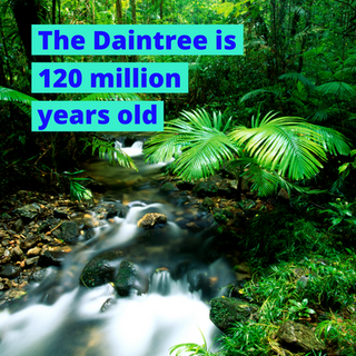 The Daintree is 120 million years old