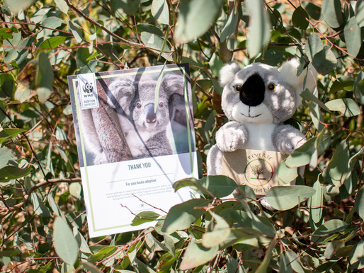 Reverse IndusTree's Koala Adoption 💚