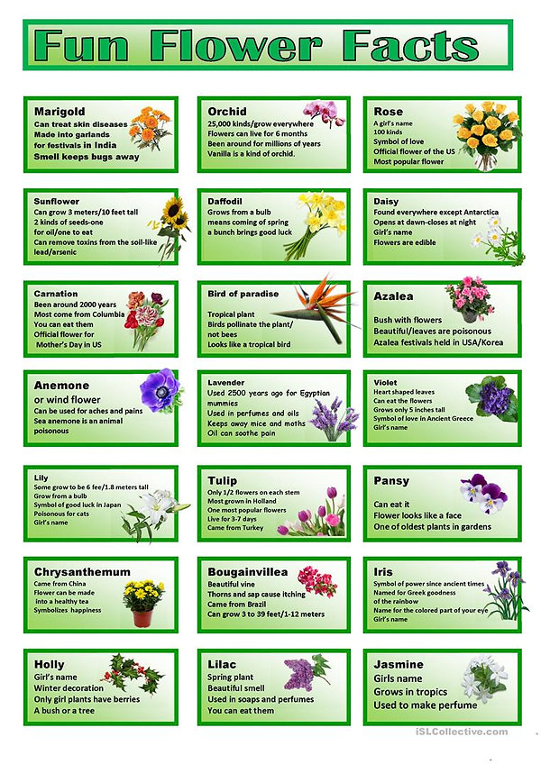 fun-flower-facts-cards-classroom-posters