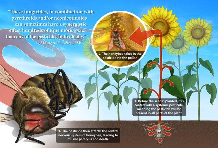 bees_chart_neonicotinoids.jpg