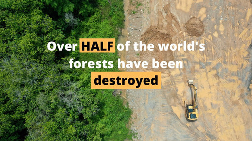 Over Half of the worlds forests have been destroyed... they've been HalfCut!