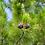 Thumbnail: My Pure Earth - Siberian Pine Essential Oil, 10ml