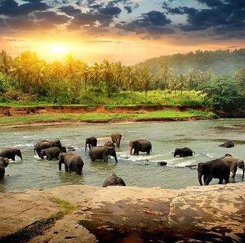 srilanka_20200106214841.jpg