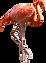 flamingo_PNG15100.png