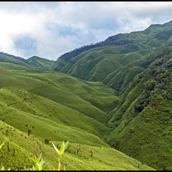 Dzukou Valley: A Paradise in North East India