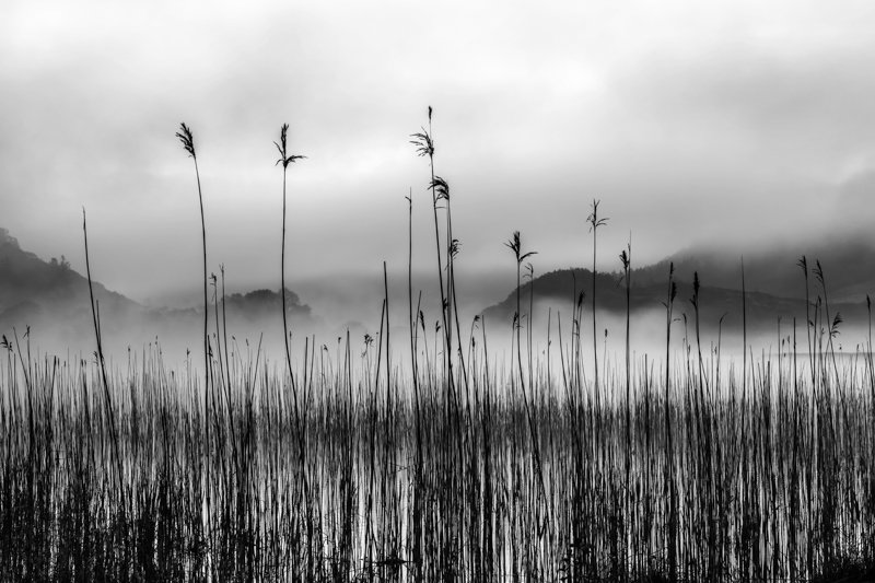 """Reed in the Mist"" by George Evans"