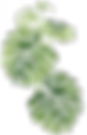 cotton-drawing-green-plant-1.png