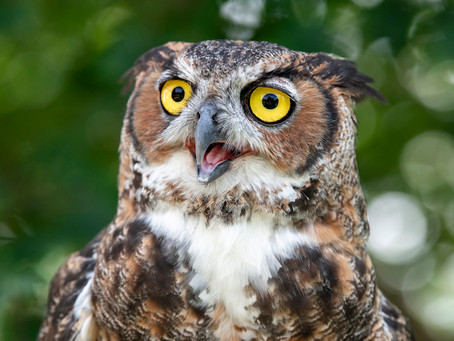 Strange Tails: Birds of Prey at Tuckahoe State Park