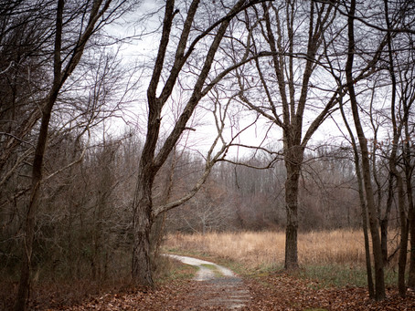 Cure your winter blues by getting out into the Caroline County woodlands