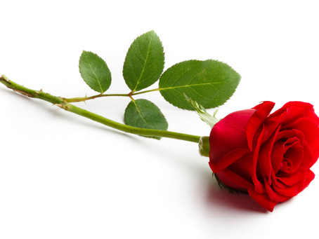 Be Well: Roses and Other Unlikely Medicines