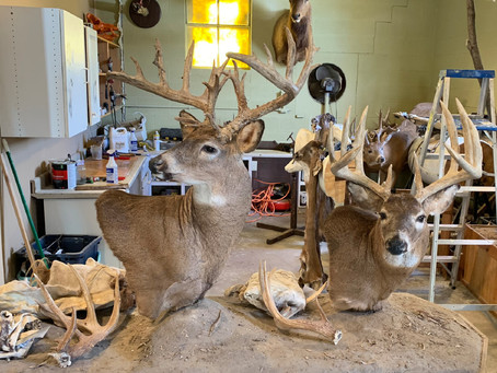 Hill & Sons Taxidermy discuss working with family, and the ins and outs of an ins and out trade