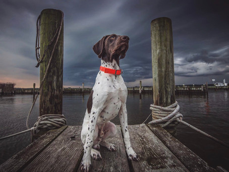 Picture Pawfect Pet Photo Contest Winner