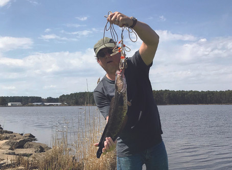 Wild Tales: The growing problem of the predator snakehead fish