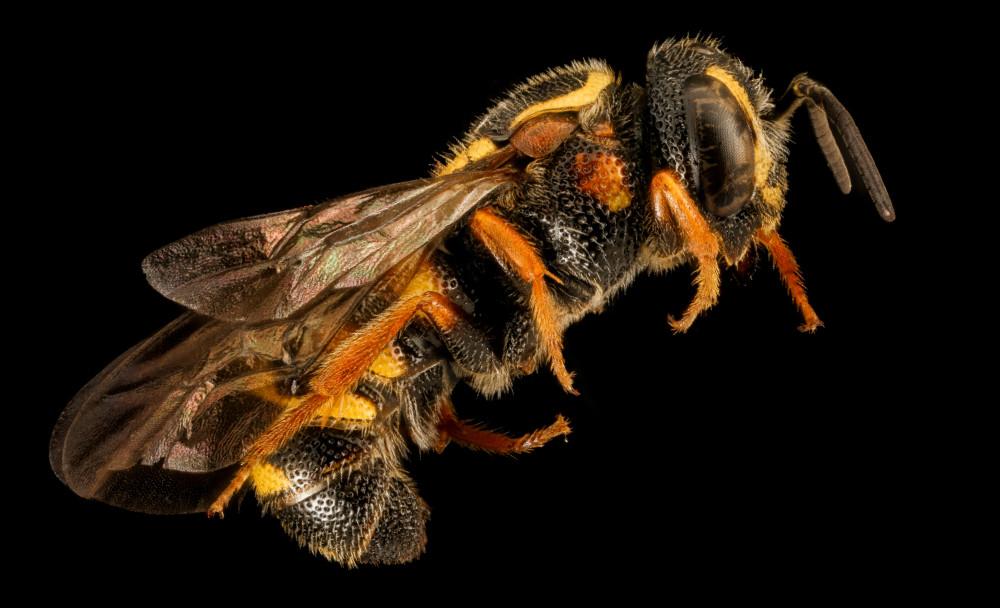 Native Bees 101