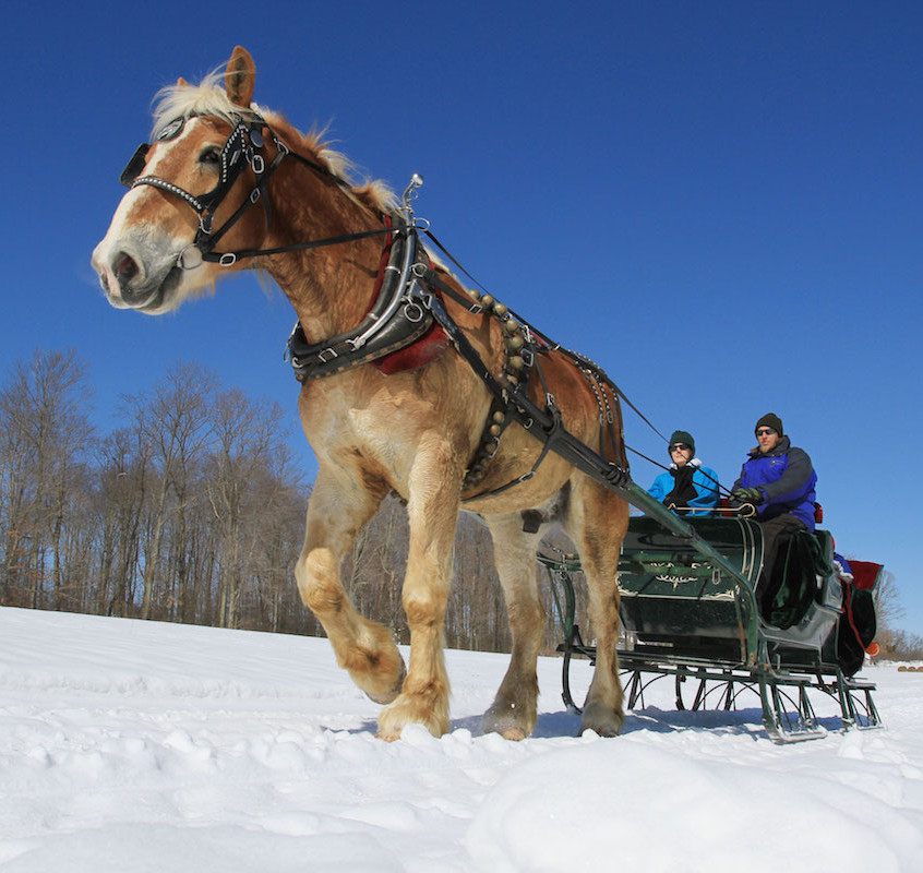 Horse Drawn Sleigh Ride in Garrett County - photo credit Garrett County Chamber of Commerce Timothy Jacobsen (1)