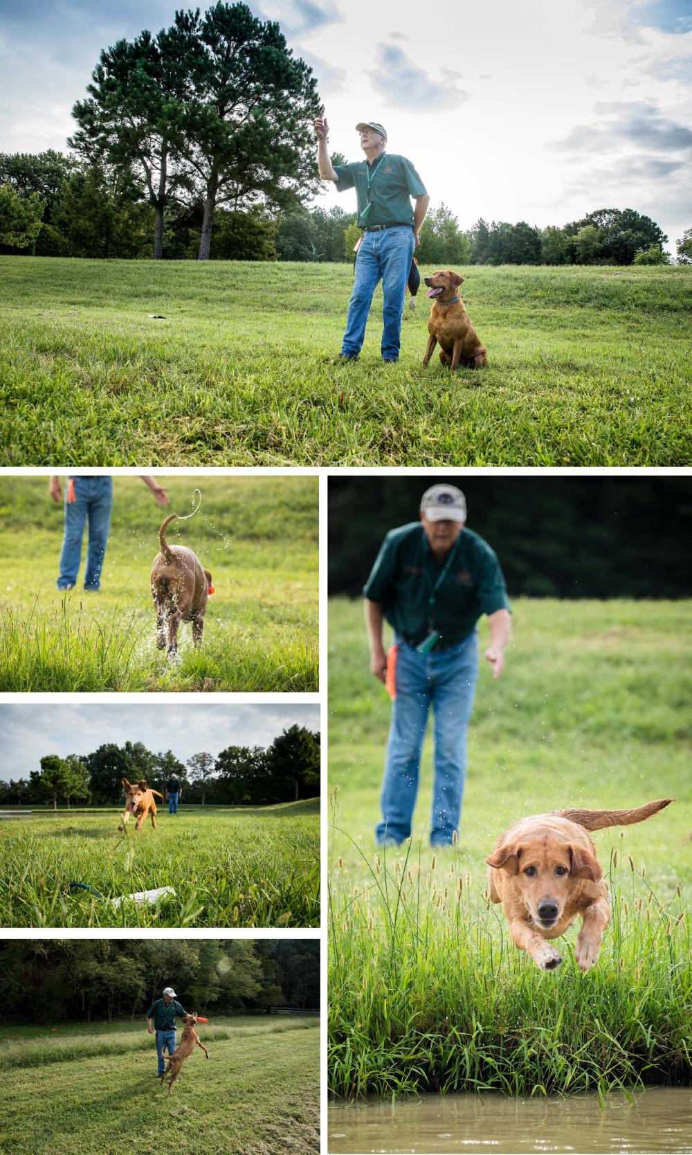Yellowdog Retrievers