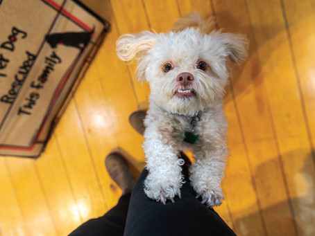 St. Michaels shop owner gives a local perspective of the benefits in bringing pets to work