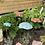 Thumbnail: Garden Mushroom (Brown)