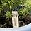 Thumbnail: Herb Plant Labels