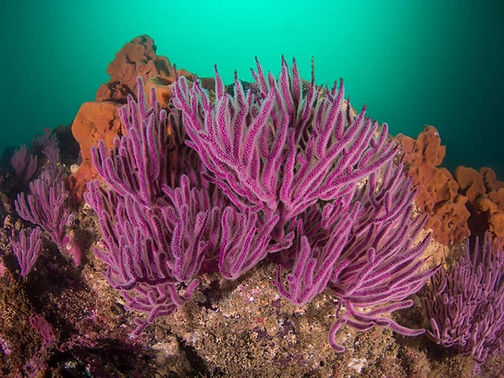 Buceo Coral