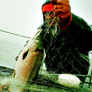 Alaska_Flats_salmon_web_000045710033.jpg