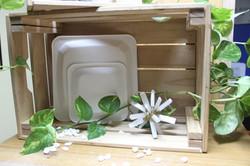 Platos cuadrados compostable