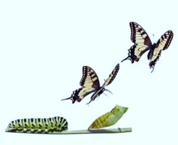 caterpillar-butterfly-0_orig_edited.jpg