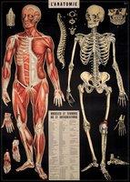 Anatomy #1