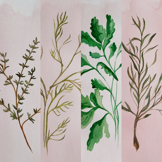 Herbs set of 4