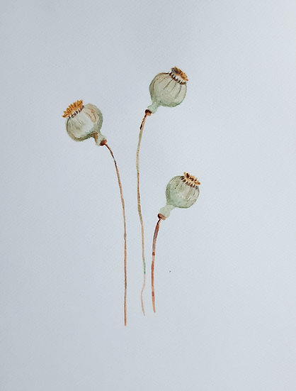 Three Poppyseed bulbs