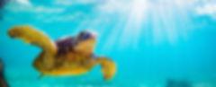 turtle_600.jpg