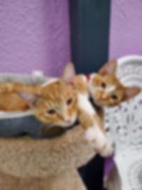 orange kittens.jpg